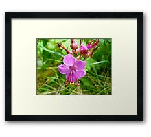 Sticky Geranium (available in ipod, iphone, & ipad cases) Framed Print