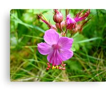 Sticky Geranium (available in ipod, iphone, & ipad cases) Canvas Print
