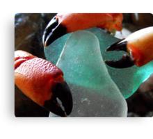 Sea Glass & Crabs Claws... Canvas Print