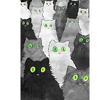 50 Shades of Cats Photographic Print