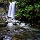Hopetoun Falls, Otway Ranges by Bevlea Ross