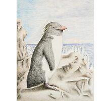 Rockhopper Penguin Photographic Print