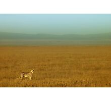 Duma plains Photographic Print