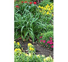 Springtime Flowers Photographic Print