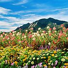 Flowers and Flatirons by Gregory J Summers