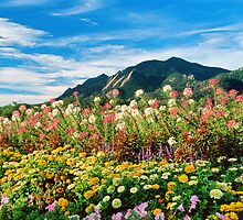Flowers and Flatirons by nikongreg