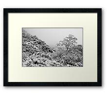 Foggy Winter's Day Framed Print