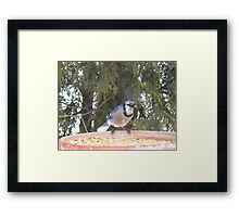 Blue Jays...strike one! Framed Print