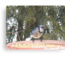 Blue Jays...strike one! Canvas Print