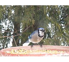 Blue Jays...strike one! Photographic Print