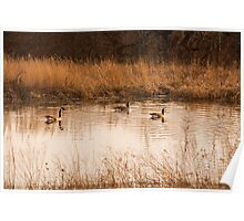Wild Geese on the Pond Poster