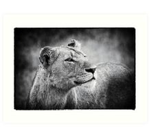 Lioness In Wait Art Print