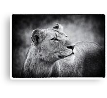 Lioness In Wait Canvas Print