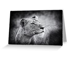 Lioness In Wait Greeting Card