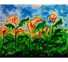 Easter Lillies, watercolor Photographic Print
