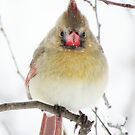 What's This?!!! More Flakes?!!! Where's Spring?!!! by lorilee