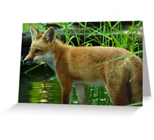 Baby Fox by Pond Greeting Card
