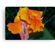 Orange Canna Lily Blossom Canvas Print