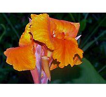 Orange Canna Lily Blossom Photographic Print