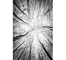 Tangle Photographic Print