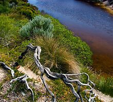 Twisted Branch, Whiskey Bay by Alex Fricke