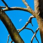 Moon Branches by Matthew Eakin