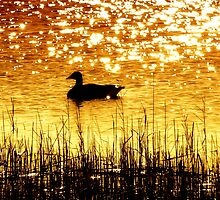 Reflecting On Nature by Sharon Woerner