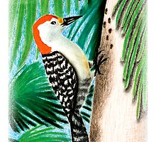 Red Bellied Woodpecker by jkartlife