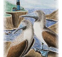 Blue Footed Booby Birds on Cliff by jkartlife