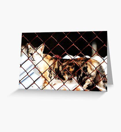 Live Beyond Fences Greeting Card