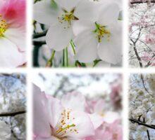 Cherry Blossoms Montage 1 Sticker