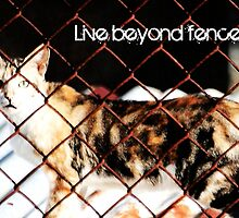 Live Beyond Fences with quote by Louis Delos Angeles