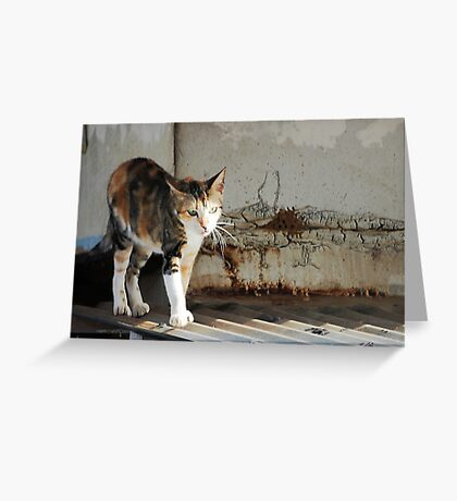 Undecided Cat Greeting Card