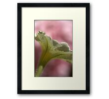 Natures Lattice  Framed Print
