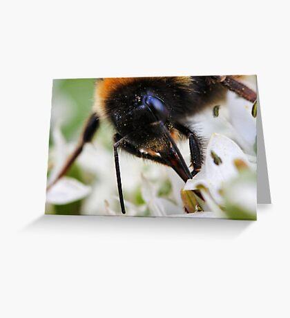 Bee nice to me or else....... Greeting Card