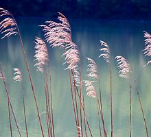 Ferns on Water -- Bavaria by PeachPark