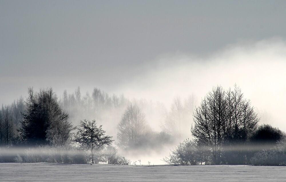 17.3.2013: Winter Morning I by Petri Volanen