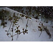 Frozen Flower Photographic Print