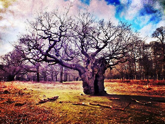 Ancient Oak Tree, Richmond Park, London by Ludwig Wagner