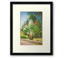 Seychelles splendour Framed Print