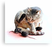 Playing cat and mouse Canvas Print