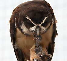 Owl  and mouse by Norma Cornes