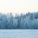 Winter Weaves Lace On Trees by paperbeaver