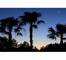 Florida Palms with Crescent Moon Photographic Print