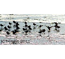 Twinkle, Twinkle Little Bird Photographic Print