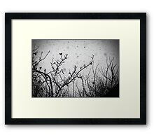 Confusing in the snow Framed Print