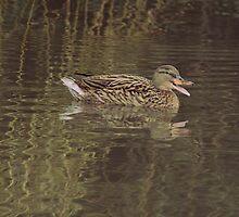 Quack Quack! by Theresa Selley