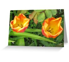 Tulips 2 Toned Red Yellow Greeting Card