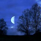 Moon between Trees ©  by JUSTART