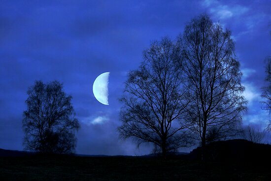 Moon between Trees - JUSTART © by JUSTART